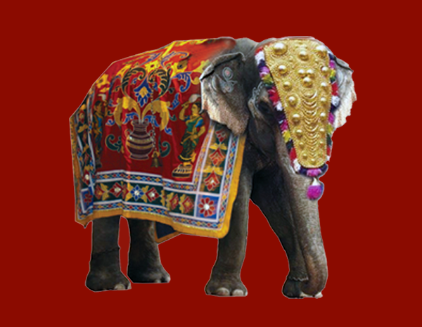 Mrg Ratham Since elephants are also domesticated in kerala on a large scale, there are many places where you can go for elephant rides and see them this festival is filled with music and fireworks and the biggest attraction of all: www mrgratham com